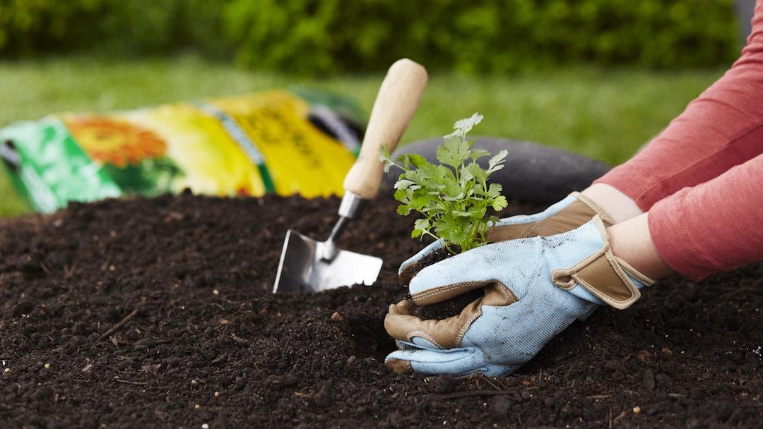 Simple gardening hacks