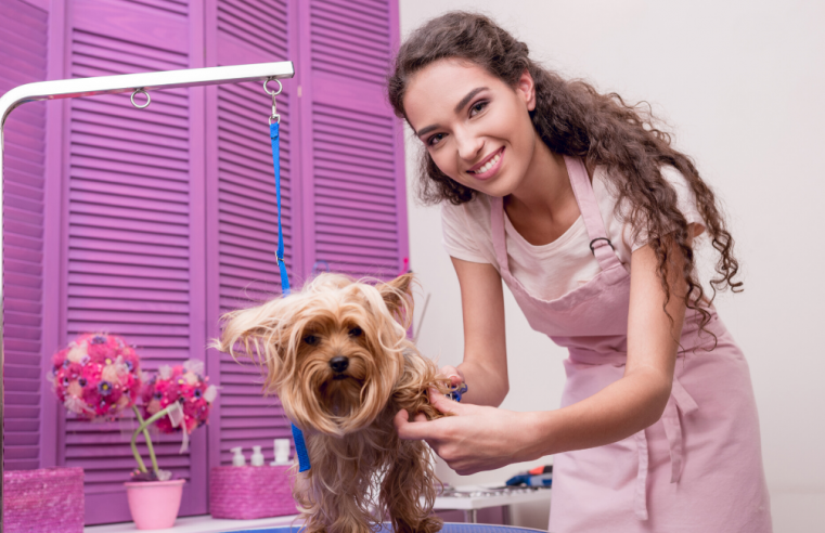 Cater to the needs of your pets with the best grooming services offered by our team.
